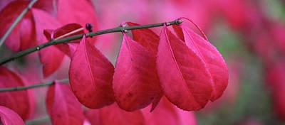 Photograph - Reddish Fall by Silke Brubaker