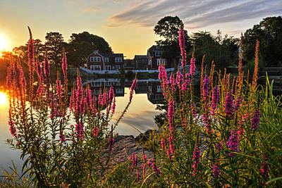 Photograph - Redd's Pond Lupines Sunrise by Toby McGuire
