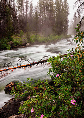 Photograph - Redfish Creek In The Morning At Stanley Idaho by Vishwanath Bhat