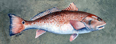 Animals Paintings - Redfish by Elaine Hodges