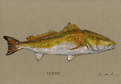 Fly Painting - Redfish Painting  by Juan  Bosco