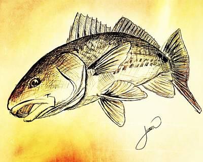 Redfish Sketch Art Print