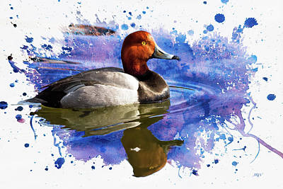 John Williams Digital Art - Redhead Drake by John Williams