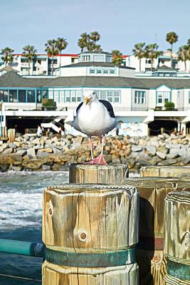 Redondo Beach Pier Wall Art - Photograph - Redondo Beach Pier With Attitude by Robert Meyers-Lussier