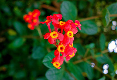 Photograph - Reds And Yellows by Robert Meyers-Lussier