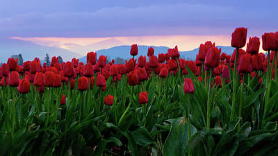 Photograph - Reds At Twilight by Idaho Scenic Images Linda Lantzy