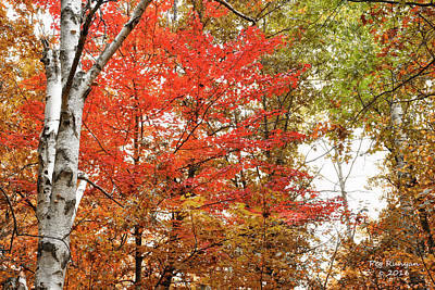 Photograph - Red's Of Autumn by Peg Runyan
