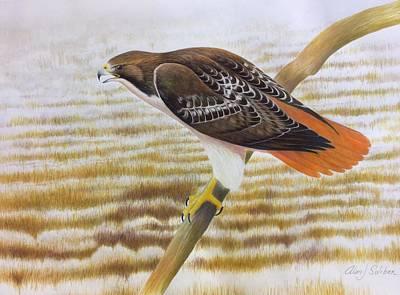 Redtail Hawk Original by Alan Suliber