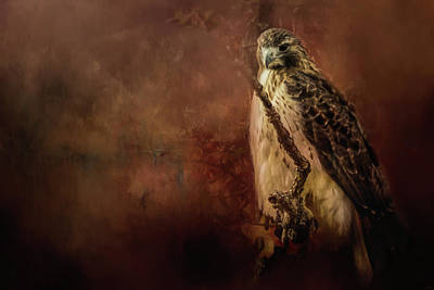 Photograph - Redtail On Patrol Hawk Art by Jai Johnson