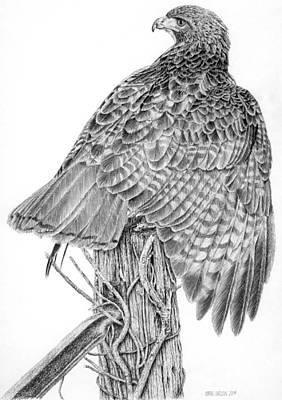 Redtailed Hawk Original by Craig Carlson