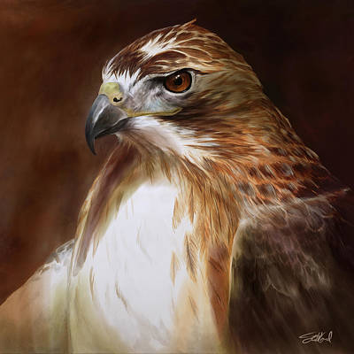 Red Tail Hawk Wall Art - Painting - Redtailed Hawk Portrait by Steve Goad