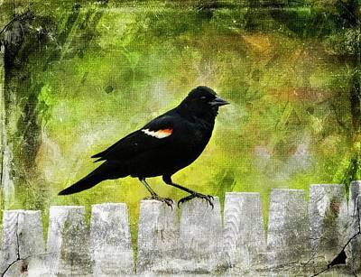 Digital Art - Redwinged Blackbird by Rusty R Smith