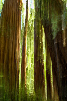 Redwood Dream Print by Bill Gallagher