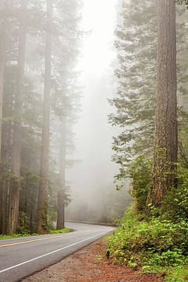 Photograph - Redwood Drive by Andrew Soundarajan
