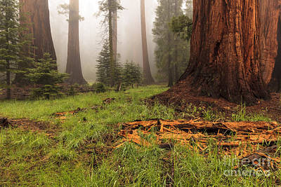 Photograph - Redwood Forest by Ben Graham