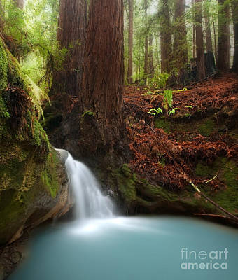 Redwood Forest Waterfall Art Print