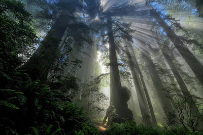 Photograph - Redwood God Rays by Greg Norrell