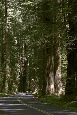 Photograph - Redwood Highway by Wes and Dotty Weber