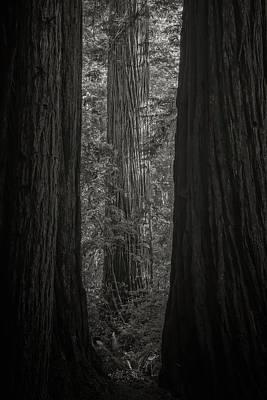 Big Tree Photograph - Redwood by Joseph Smith
