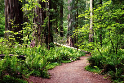 Photograph - Redwood Lush by Lana Trussell