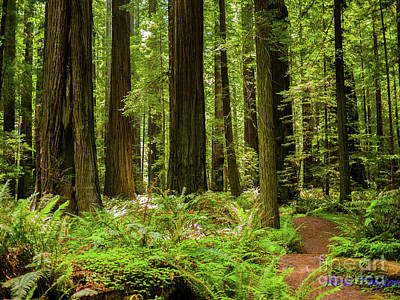 Kitchen Mark Rogan Rights Managed Images - Redwood National Park Royalty-Free Image by Ron Taylor
