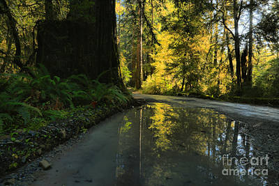 Photograph - Redwood Reflecitons Landscape by Adam Jewell