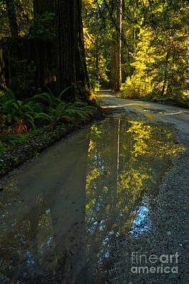 Photograph - Redwood Reflecitons Portrait by Adam Jewell