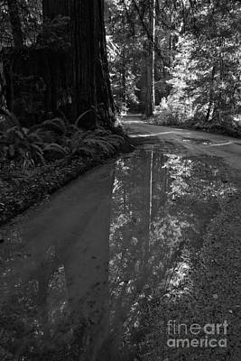 Photograph - Redwood Reflections Black And White Portrait by Adam Jewell