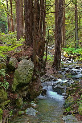 Redwood Stream Art Print by Arthurpete Ellison