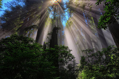 Photograph - Redwood Sunbeams by Greg Norrell