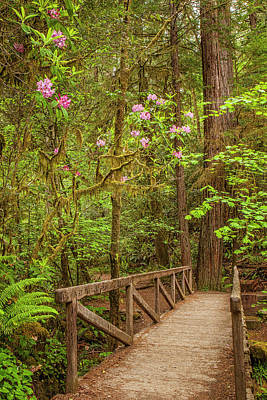 Photograph - Redwood Trail  In The Spring by Andrew Soundarajan