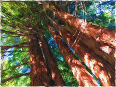 Mixed Media - Redwoods 2 by Jonathan Nguyen