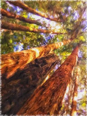 Photograph - Redwoods 3 by Jonathan Nguyen