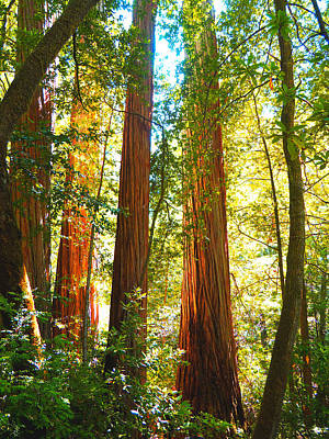 Redwood National Park Photograph - Redwoods At First Light by Ryan Scholl