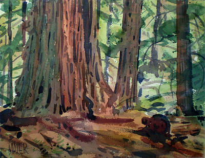 Redwoods Painting - Redwoods by Donald Maier