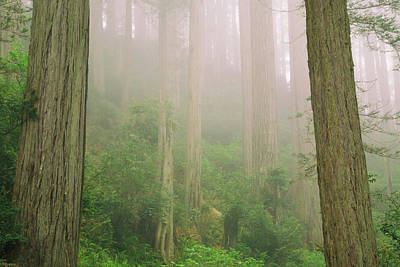 Photograph - Redwoods Fog by Kunal Mehra