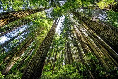 Polaroid Camera - Redwoods by Heather Allen