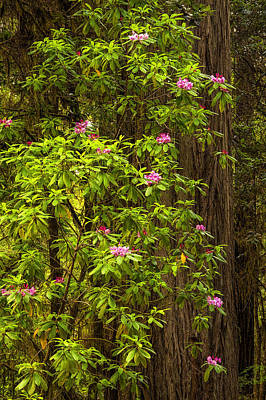 Flower Photograph - Redwoods In The Spring by Andrew Soundarajan