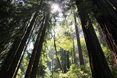 Photograph - @redwoods by Jim McCullaugh