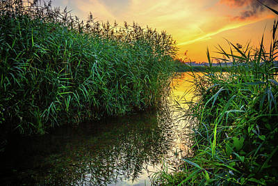Photograph - Reed At The River by Holger Debek