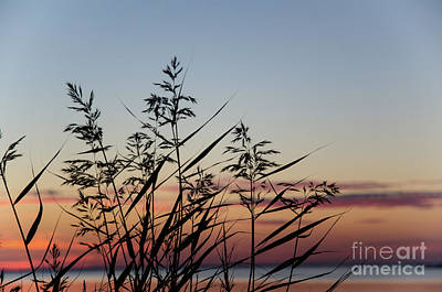 Photograph - Reed By Coast At Sunset by Kennerth and Birgitta Kullman