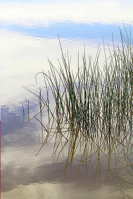Photograph - Reed Reflection by Art Block Collections