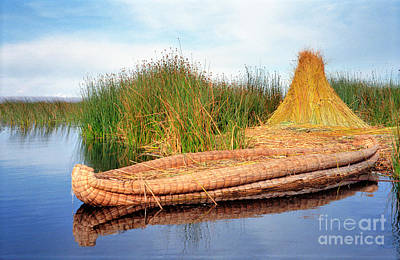 Art Print featuring the photograph Reed Reflection by Nigel Fletcher-Jones