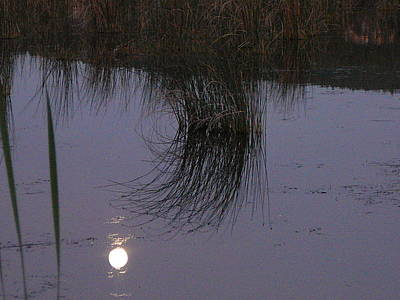 Photograph - Reed Reflections by Mark Lehar