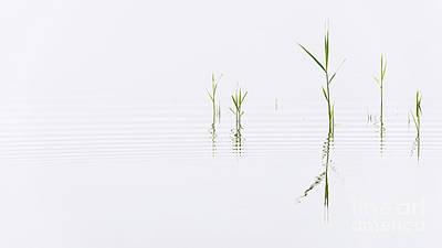Reed Ripples Art Print by Richard Thomas