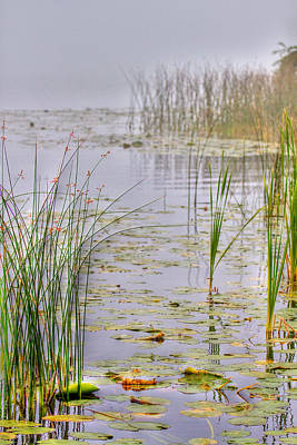 Lilly Pond Photograph - Reeds And Fog by Naman Imagery