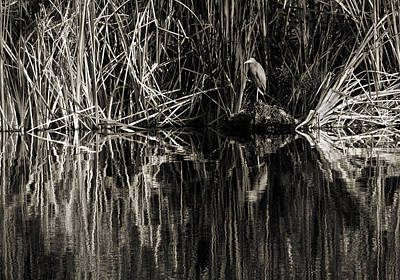 Photograph - Reeds And Heron by Steven Sparks