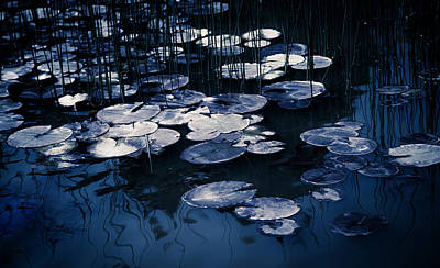 Lilies Royalty-Free and Rights-Managed Images - Reeds and Pads 9 by Rebecca Cozart
