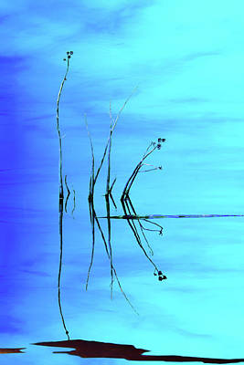 Photograph - Reeds And Reflection In Blue by Nikolyn McDonald