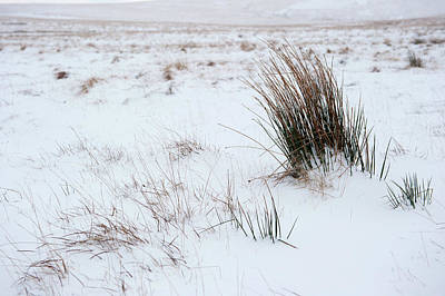 Photograph - Reeds And Snow by Helen Northcott